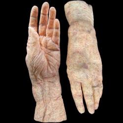 HAG FEMALE HANDS