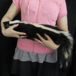 SKUNK PUPPET-NATURAL FUR FILLED WITH FOAM