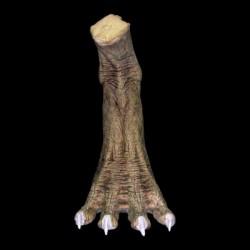 REPTILE - LEFT FOOT