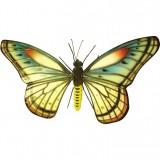 Бабочка (каучук)