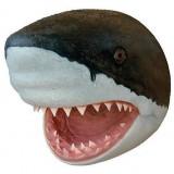Голова акулы